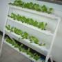 Домашня гідропонна система на 36 рослин