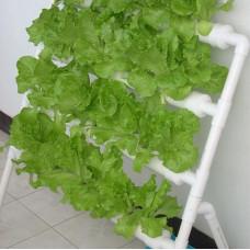 Гідропонна система на 36 рослин